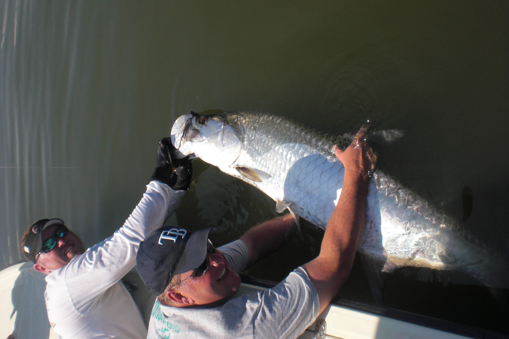 a tampa fisherman with tarpon